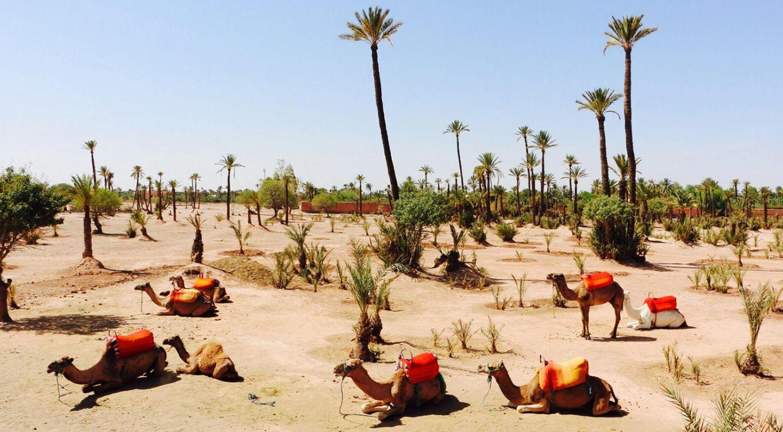 Erfoud / Tineghir / Ouarzazate